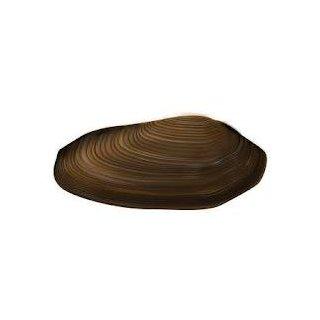 muscheln koi teichfische online kaufen koicenter. Black Bedroom Furniture Sets. Home Design Ideas